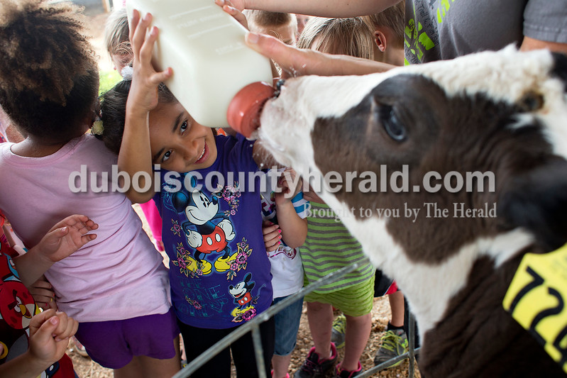 Ireland Elementary School kindergartner Sonali Rathee bottle fed a 2-month-old calf named Domino while on a field trip Tuesday afternoon at the Huntingburg dairy farm owned and operated by Darren and Sam Schwoeppe. Dave Weatherwax/The Herald