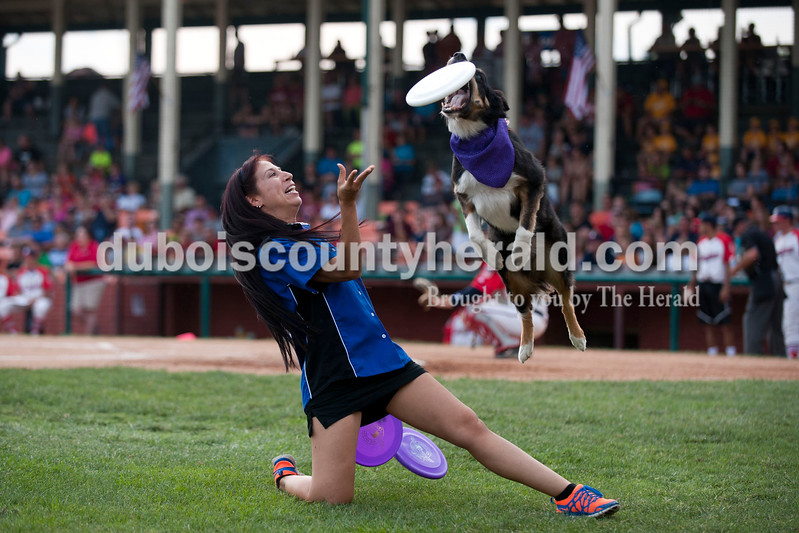 """Carolyn Van Houten/The Herald<br /> Sampson, a 9-year-old border collie, performed with Misty Wright of Louisville on Sunday during the Bombers' game at League Stadium in Huntingburg.  She performs with her husband, Jeff Wright, and their nine dogs under the name Flying Houndz Frizbee.  """"These aren't just our performing dogs,"""" Misty said.  """"These are our family and our kiddos."""""""