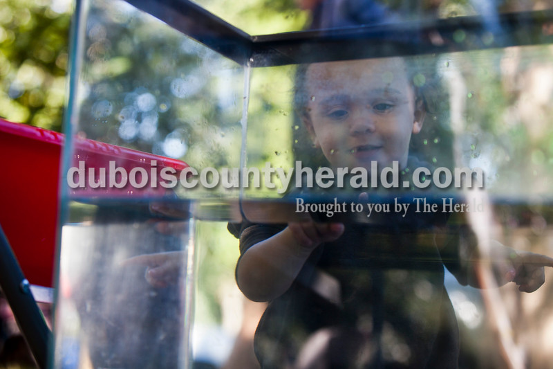 Carter Ace Johnson of Duff, 1, peered into a fish tank game at the Holland Community Festival on Saturday.<br /> Caitlin O'Hara/The Herald