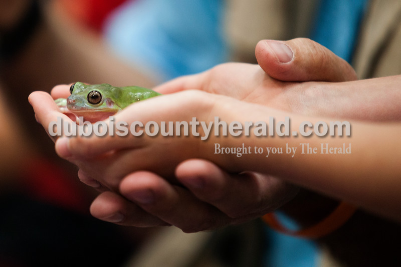 Jillian Dittelberger of Ireland, 8, held a white's tree frog during the Silly Safari event at the Jasper Public Library on Tuesday afternoon. <br /> Alisha Jucevic/The Herald