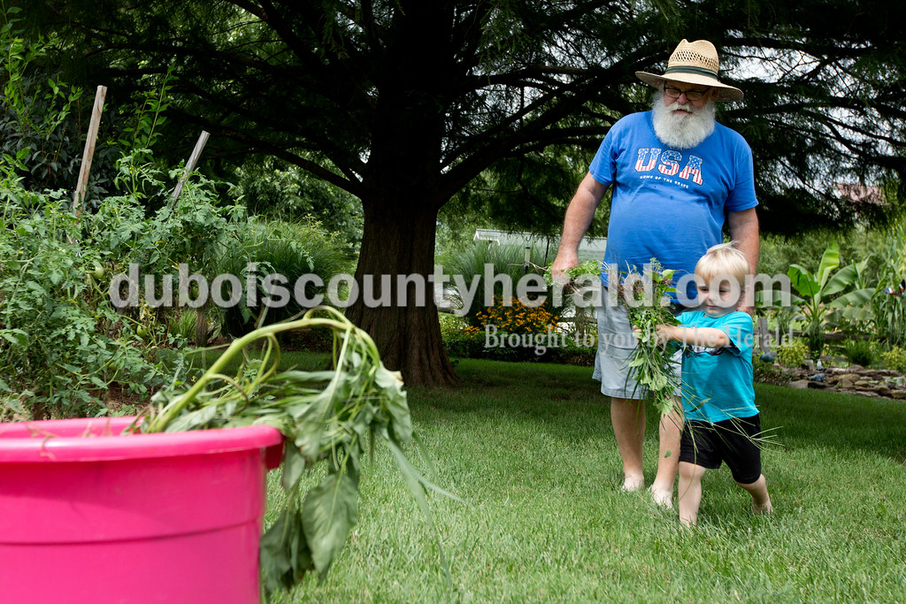 Ariana van den Akker/The Herald<br /> Bentley Mohr of Ferdinand, 3, helped his great uncle John Mohr of Ferdinand by putting picked weeds in a bucket while at John's home on Monday afternoon. Bentley and his brother Issac, 8, spend their days at John and his wife Marjorie's home and sometimes help out with the garden.