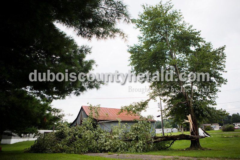 A fallen tree lay on the ground off of West 9th Street on Monday afternoon in Ferdinand. <br /> Alisha Jucevic/The Herald
