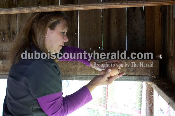 Erica Lafser/The Herald Paula Mayo of Jasper performed the daily check for eggs at the chicken coop behind her home in Jasper. They usually have two to four eggs, but this day there were six from the five hens and one rooster.