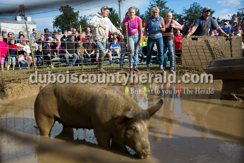Alisha Jucevic/The Herald<br /> <br /> Cassi Beier of Mariah Hill, 13, left, Penni Beckman-Williams of Tennyson, center, and Hayley McKim of Bristow, 17, prepare to charge at their pig during the Dale Fall Festival's annual hog wrestling contest Saturday.