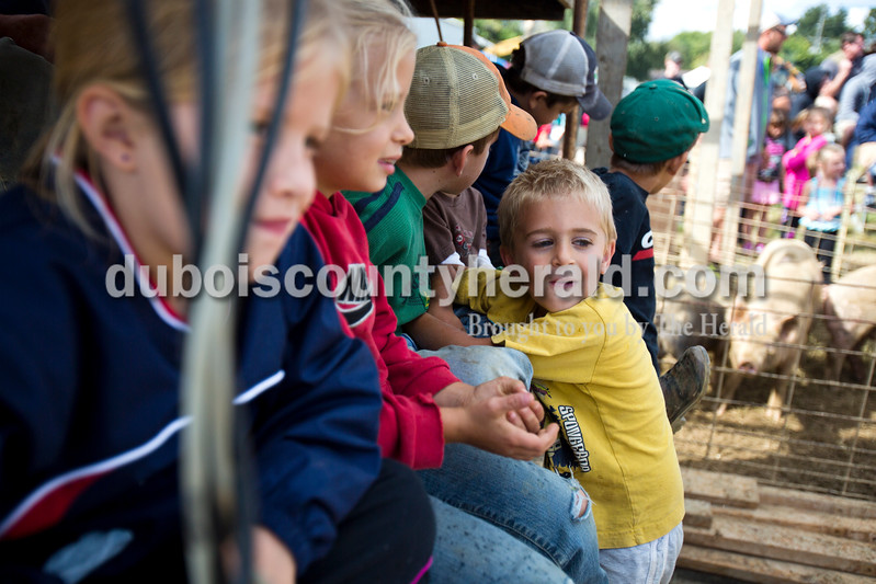 Alisha Jucevic/The Herald<br /> <br /> Blake Seifert of Dale, 3, watched the crowds form around the hog wrestling pit on Saturday afternoon at the Dale Fall Festival.