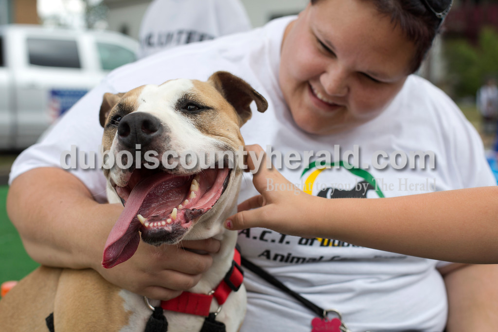 Erica Lafser/The Herald<br /> Nicole Schnell of Celestine held the pitbull mix, Sadie, while Grace Bartley of Jasper, 10, pet her before the Herbstfest parade on Sunday in Huntingburg.
