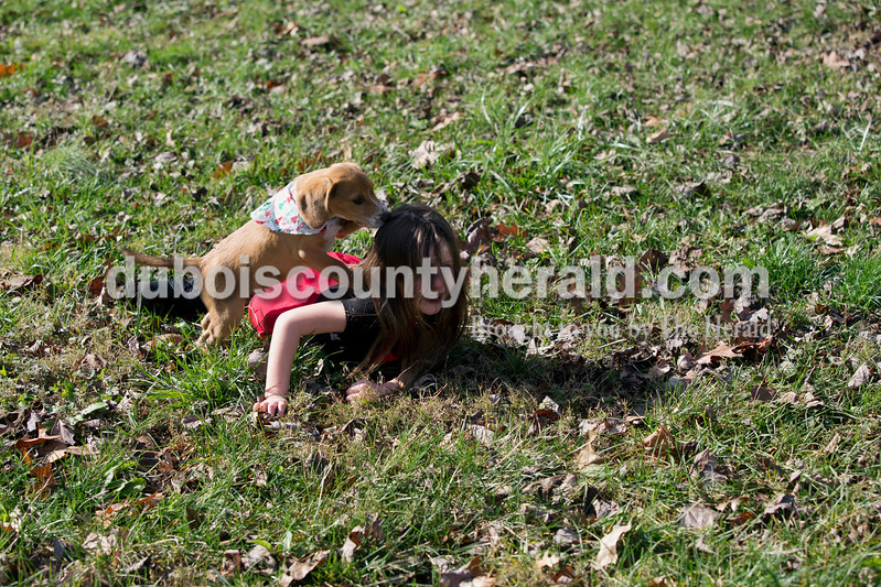 """Erica Lafser/The Herald<br /> Delilah Stivers of Huntingburg, 4, played with her new puppy, Kale, in her backyard on Christmas Eve Thursday after she opened a special box that Dubois County Humane Society adoption counselor Hannah Fuhs of Jasper delivered with help from Heath Vollmer of Jasper. Despite the Humane Society offering this surprise to everyone, the Stivers were the only family who accepted the offer. Delilah knew she was going to receive Kale at some point, but she did not know when. """"(Delilah's) been asking for a dog since her birthday in April"""" Ashton said."""