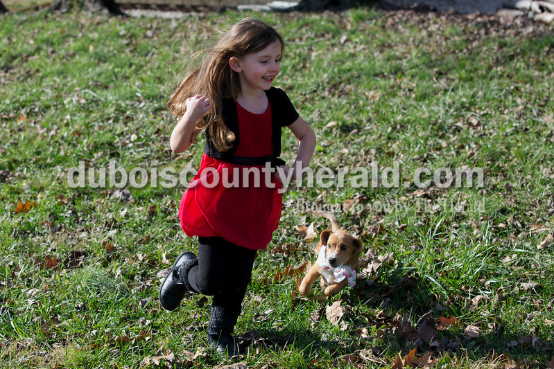 "Erica Lafser/The Herald<br /> Delilah Stivers of Huntingburg, 4, ran alongside her new puppy, Kale, in her backyard on Christmas Eve Thursday after she opened a special box that Dubois County Humane Society adoption counselor Hannah Fuhs of Jasper delivered with help from Heath Vollmer of Jasper. Despite the Humane Society offering this surprise to everyone, the Stivers were the only family who accepted the offer. Delilah knew she was going to receive Kale at some point, but she did not know when. ""(Delilah's) been asking for a dog since her birthday in April"" Ashton said."