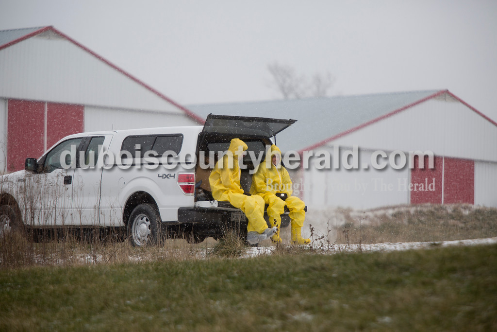 Sarah Ann Jump/The Herald<br /> Workers wearing contamination suits were driven to turkey houses on a farm along North Hickory Grove Road in Dubois on Sunday.