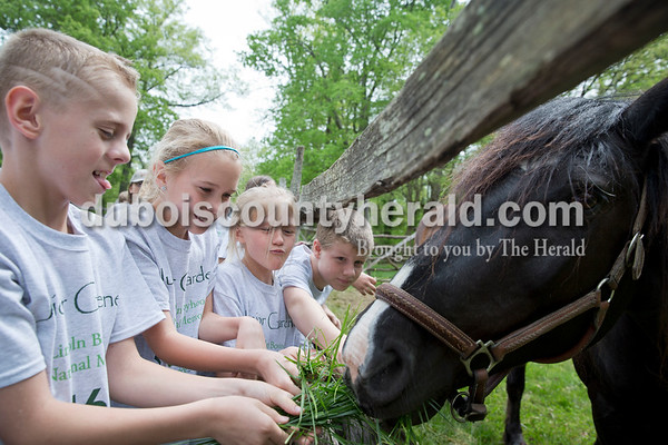 Sarah Ann Jump/The Herald Nancy Hanks Elementary fourth-graders Hunter Grey, left, Riley Ayer, Rylie Kelley and Caden Lange feed grass to Jack the horse during a field trip to the Living Historical Farm at Lincoln Boyhood National Memorial in Lincoln City.