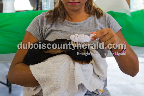 """Hannah Rottet of Jasper, 12, brushed her Tan breed rabbit, Peanutbutter Cup, with a rabbit-shaped brush on Tuesday evening in the rabbit barn at the Dubois County 4-H Fair in Bretzville. """"Tans are really wild sometimes so it calms them,"""" she said.   Alisha Jucevic/The Herald"""