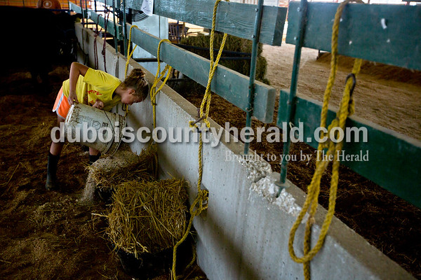 Mykela Tanner of Huntingburg, 9, poured feed into individual buckets for her family's cattle Monday evening during animal check in at the Dubois County 4-H  Fairgrounds in Bretzville.    Alisha Jucevic/The Herald