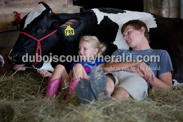 Sarah Shaw/The Herald  Kensley Gogel of St. Henry, 6, fed hay to a dairy cow that Zach Cline of Kyana, 18, showed this year at the Dubois County 4-H Fairgrounds in Bretzville on Wednesday.