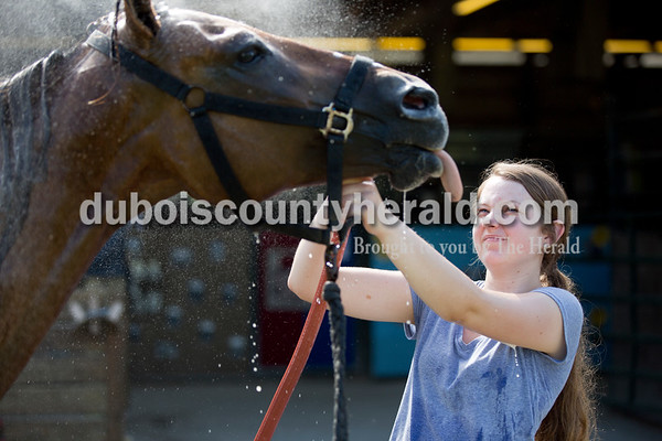 Sarah Shaw/The Herald  Caroline Gadlage of Jasper, 17, washed her quarter horse named Windy outside the horse barn at the Dubois County 4-H Fairgrounds in Bretzville on Tuesday.