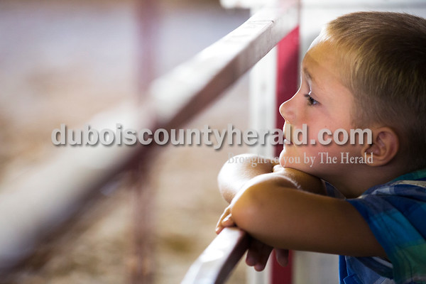 Sarah Ann Jump/The Herald Carson Mitchell of Schnellville, 6, watched the beef show at the Dubois County 4-H Fairgrounds in Bretzville on Thursday.
