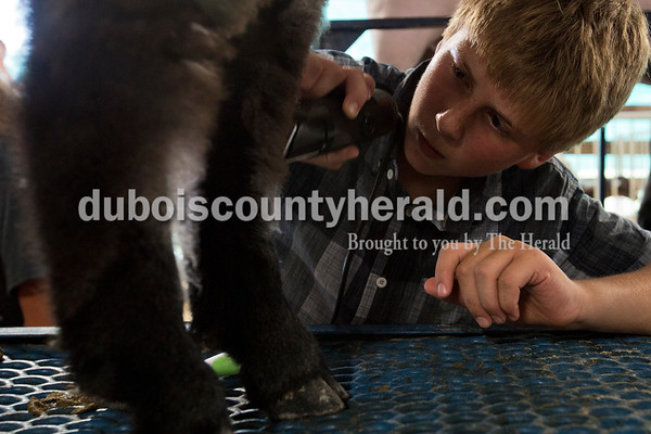 Cody Scherle of Ireland, 14, groomed his sheep before the sheep and goat shows began Wednesday evening at the Dubois County 4-H Fair in Bretzville.  Alisha Jucevic/The Herald