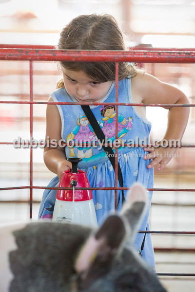 Sarah Ann Jump/The Herald Ashtyn Oeding of Ferdinand, 4, sprayed water on her cousin Emily Oeding's hogs at the Dubois County 4-H Fairgrounds on Tuesday morning.