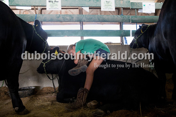 Sarah Ann Jump/The Herald Lydia Betz of Schnellville, 11, rested with her family's three black angus cattle in the beef barn at the Dubois County 4-H Fairgrounds on Tuesday morning.