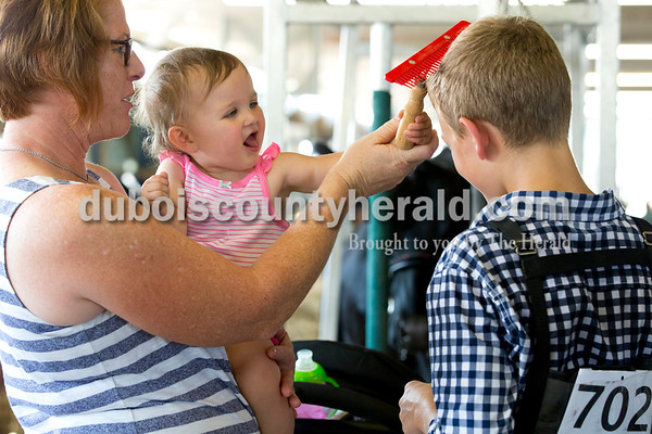 Sarah Ann Jump/The Herald Brooklyn Leinenbach of Jasper, 1, used a cattle comb to brush the hair of her cousin Calvin Hasenour of Ferdinand, 12, with help from family friend Karen Schwenk of Jasper at the Dubois County 4-H Fairgrounds in Bretzville on Thursday.