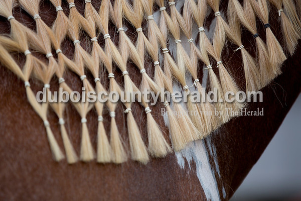 Sarah Shaw/The Herald  Hailey Thayer of Schnellville, 17, plaited her horse Dutchess's mane into a fishnet style at the Dubois County 4-H Fairgrounds in Bretzville on Wednesday.