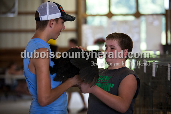 Chase Verkamp, 12, took his chicken from Garrett Betz, 15, both of Schnellville, to put it back in it's cage after they held it on Tuesday evening at the Dubois County 4-H Fair in Bretzville.   Alisha Jucevic/The Herald