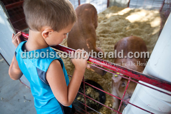 Sarah Ann Jump/The Herald Andrew Lloyd of Chrisney, 5, looked at the hogs belonging to his cousin Madelynne Wagner of Jasper, 16, and her brother Noah, 12, during animal check-in at the Dubois County 4-H Fairgrounds in Bretzville on Monday.