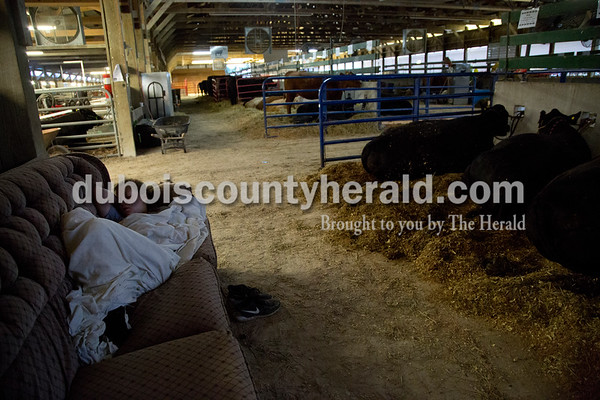 Sarah Shaw/The Herald  Emma Uebelhor of Ferdinand, 16, slept on a couch in the cattle barn Wednesday morning at the Dubois County 4-H Fairgrounds in Bretzville.