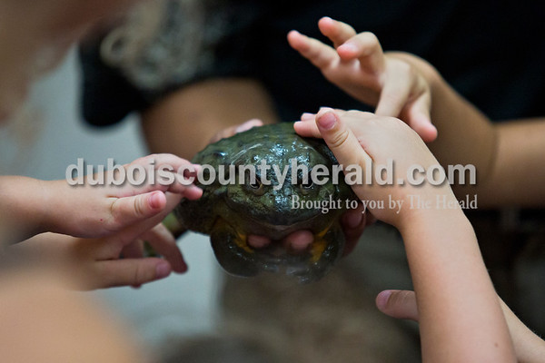 Children reached in to touch an African bullfrog during Animal Tales' Nature's Olympians ppresentation Tuesday afternoon at the Jasper Public Library. The program featured seven exotic animals from around the world that utilize unique abilities to adapt and survive out in the wild. Naturalist Riko Herrera explained how the bullfrog can hold its breath underwater for up to 20 minutes, much longer than the human lungs capability.  Alisha Jucevic/The Herald
