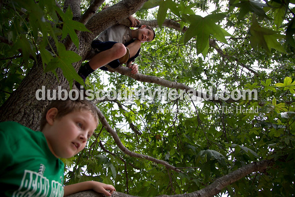 Sarah Shaw/The Herald Eli Underhill of Tell City, 9, and Cayden Lamon of Tell City, 11, climbed a tree to overlook the festivities during the town of Birdseye's annual picnic at Birdseye Park on Saturday.