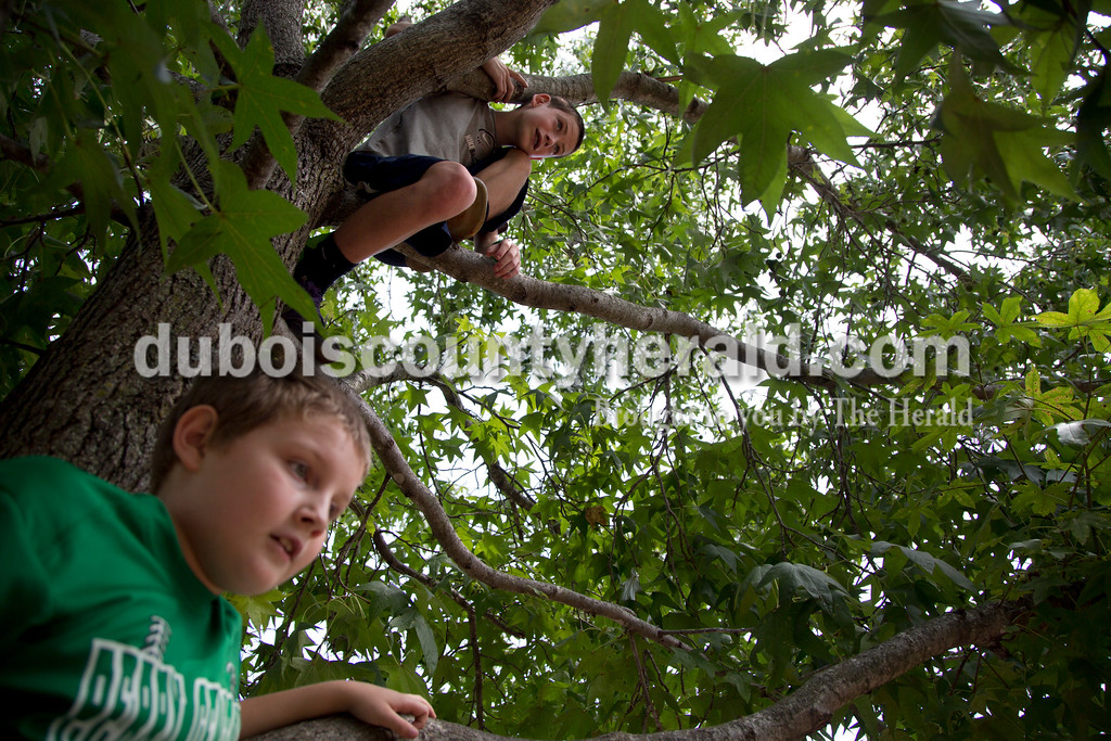 Sarah Shaw/The Herald<br /> Eli Underhill of Tell City, 9, and Cayden Lamon of Tell City, 11, climbed a tree to overlook the festivities during the town of Birdseye's annual picnic at Birdseye Park on Saturday.