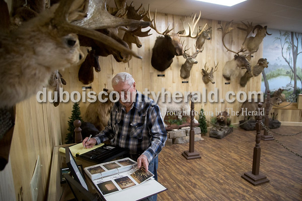 Sarah Shaw/The Herald Tom Kellams of Ireland reviewed archived photos in the Wildlife Adventures Room at the Dubois County Museum in Jasper on Tuesday. Kellams designed and organized the taxidermy exhibit which opened last year.