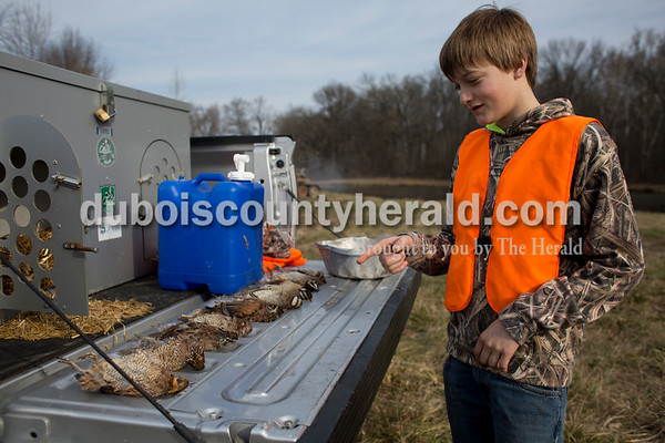 Sarah Ann Jump/The Herald Blake Danzer of Jasper, 13, counted the quail laid out on a truck bed during the Patoka Hills Wes Settle Youth Quail Hunt at Cane Creek Hunting Preserve in Otwell on Saturday.