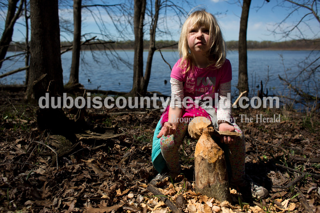 Tegan Johnston/The Herald<br /> Adessah Ross of Petersburg, 5, examined the work of beavers to a tree during a nature walk on Saturday at the Patoka River National Wildlife Refuge. Patoka River National Wildlife Refuge Friends sponsored a spring wildflower walk and photography workshop to promote support and awareness for the refuge.