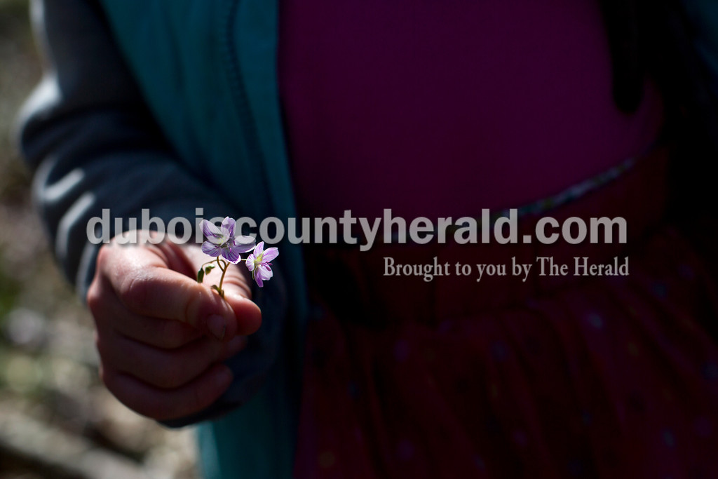 Tegan Johnston/The Herald<br /> Adessah Ross of Petersburg, 5, held onto Spring Beauties she picked during a nature walk on Saturday at the Patoka River National Wildlife Refuge. Patoka River National Wildlife Refuge Friends sponsored a spring wildflower walk and photography workshop to promote support and awareness for the refuge.