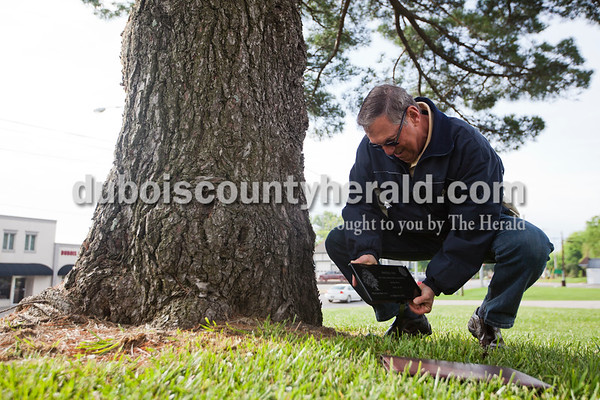 Alisha Jucevic/The Herald      Mike Dooley of Jasper placed the Patoka 2000's annual Arbor Day tree dedication plaque at the base of the white pine that stands outside  the Indiana State Police Post Friday morning in Jasper.