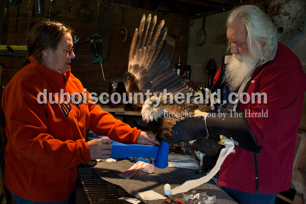 Joanne Lange, left, wrapped the amputated wing of an eagle named Mr. America as Angel held the bird April 21. They must repeat the process daily and take it for weekly check-ups at the veterinarian until the eagle can be placed in a refuge, where it will be used for breeding.