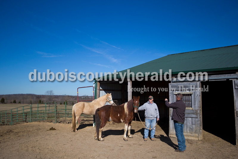 Dr. Greg Hoagland took photos of Chuck Webb's horse at Webb's property in Lamar on Feb. 17. The photos are part of the standard infectious equine anemia screening.