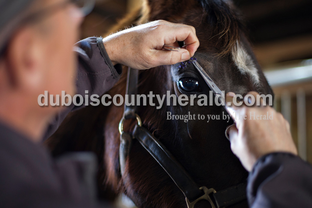 Dr. Greg Hoagland removed stitches from a horse at Wild Serenade Ranch on Feb. 17 in Stendal.