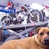 oldbikes 5.jpg