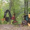 logging093015 3.jpg