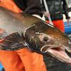 fishhatch112014 6.jpg