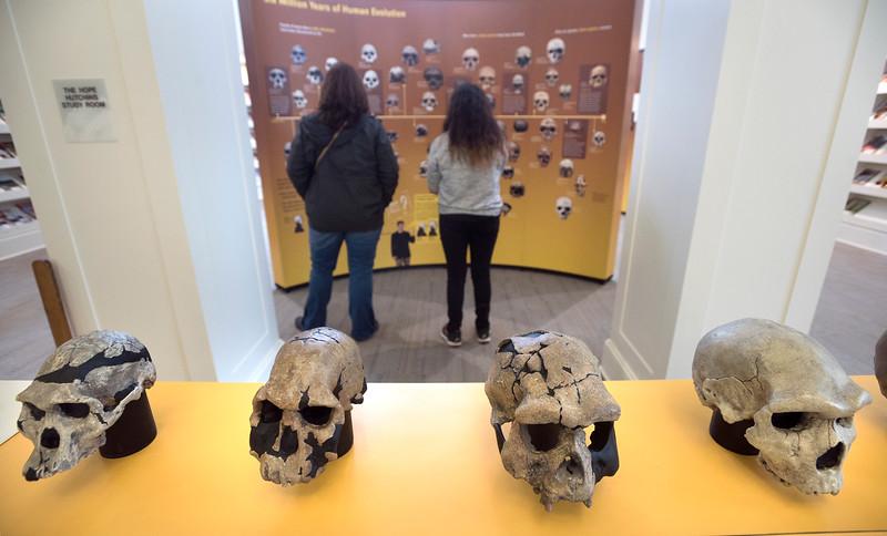 skulls 030517 1.jpg