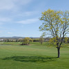 Spring shadow at Bangor Muni.jpg