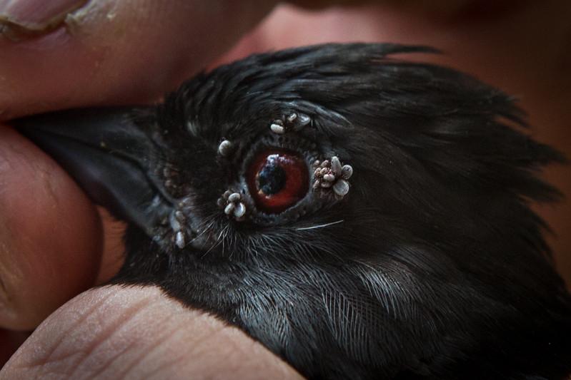 BIRD_TICKS-1.jpg