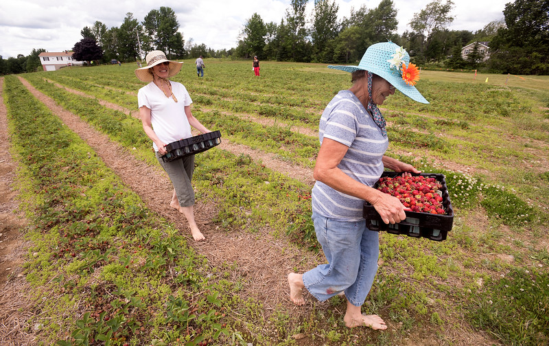 strawberry062717 1.jpg