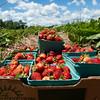 strawberries070115 4.jpg