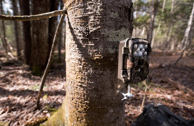 TrailCameras051117 3.jpg