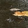 rain102214.jpg