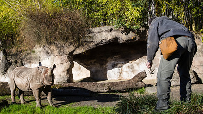 jingle jangle week 1: portland zoo