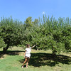 Willowbook Apple Orchard